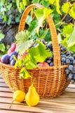 Cesta de fruta en el sol de la tarde en el jardín Fotografía de archivo libre de regalías
