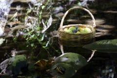 Cesta de fruta fresca Fotografía de archivo libre de regalías