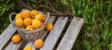 A cesta de fruto está no banco Imagens de Stock
