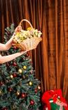 Cesta de fruto no fundo da árvore de Natal imagem de stock