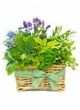 Cesta de hierbas frescas Foto de archivo libre de regalías