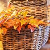 Cesta de hojas Foto de archivo libre de regalías