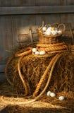 Cesta de huevos en una bala de heno Fotografía de archivo
