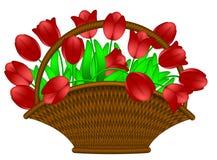 Cesta de ilustración roja de las flores de los tulipanes Imágenes de archivo libres de regalías