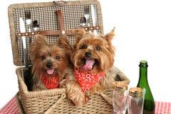 Cesta de la comida campestre de perritos Foto de archivo