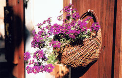 Cesta de la flor Fotografía de archivo libre de regalías
