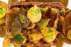Cesta de la paja con de otoño todavía de las hojas vida amarilla y marrón Fotos de archivo libres de regalías