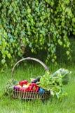 Cesta de legumes frescos no jardim Imagem de Stock Royalty Free