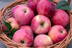 Cesta de maçãs maduras Fotografia de Stock Royalty Free
