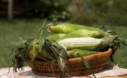 Cesta de maíz Foto de archivo libre de regalías