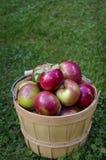 Cesta de madeira com as maçãs vermelhas de Macintosh da parte superior no fundo da grama verde com espaço da cópia imagem de stock royalty free