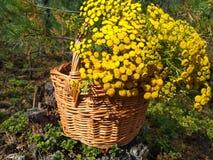 Cesta de madera muy bonita llenada de las flores amarillas fotos de archivo libres de regalías