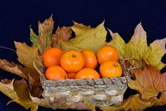 Cesta de mandarines Imagenes de archivo