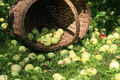Cesta de manzanas Fotos de archivo