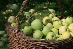 Cesta de manzanas Imagen de archivo