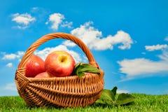 Cesta de manzanas fotografía de archivo libre de regalías