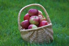 Cesta de manzanas Fotos de archivo libres de regalías