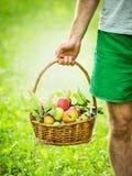 Cesta de manzanas en la mano de un hombre en un verde, fondo natural soleado, cierre para arriba Imágenes de archivo libres de regalías