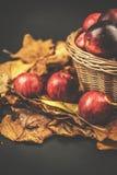 Cesta de mimbre con las manzanas, blackbackground del otoño de las hojas Fotografía de archivo libre de regalías