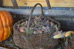 Cesta de mimbre con las manzanas y las avellanas, colocándose al lado de la calabaza y del maíz Fotografía de archivo