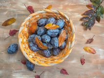 Cesta de mimbre con los ciruelos y las hojas de otoño maduros en un fondo de madera marrón imagen de archivo