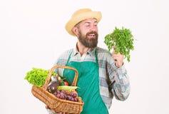 Cesta de mimbre de las verduras org?nicas frescas El delantal del desgaste del jardinero del inconformista lleva verduras Verdura imagenes de archivo