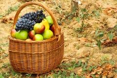 Cesta de mimbre llenada de las frutas imagenes de archivo