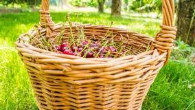 Cesta de mimbre por completo de cerezas de la empanada Fotografía de archivo libre de regalías