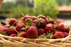 Cesta de mimbre por completo de fresas sabrosas rojas frescas escogidas Fotografía de archivo
