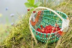 Cesta de morangos da floresta fotografia de stock