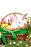 Cesta de Pascua Imagen de archivo