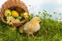 Cesta de Pascua con el polluelo amarillo Fotos de archivo