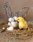 Cesta de Pascua con los huevos y el polluelo Foto de archivo