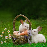 Cesta de Pascua y el conejito de pascua Imagen de archivo libre de regalías