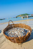 Cesta de peixes pequenos Imagens de Stock Royalty Free