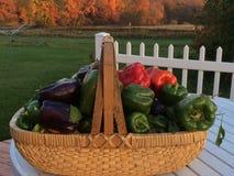 Cesta de pimentas recentemente escolhidas Foto de Stock Royalty Free