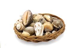 Cesta de shelles Fotografía de archivo libre de regalías