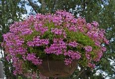 Cesta de suspensão bonita com flores cor-de-rosa Fotografia de Stock