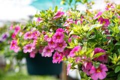 Cesta de suspensão da flor fotos de stock