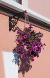 Cesta de suspensão das flores na parede do fundo Fotografia de Stock