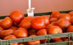 Cesta de tomates Imágenes de archivo libres de regalías