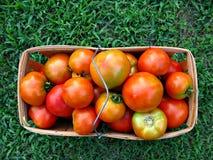 Cesta de tomates frescos de la granja imágenes de archivo libres de regalías