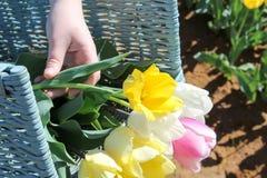 Cesta de tulipanes Foto de archivo