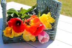 Cesta de tulipanes Foto de archivo libre de regalías