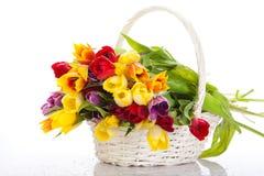 Cesta de tulipanes aislados en el fondo blanco. Fotografía de archivo libre de regalías