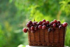 Cesta de uvas para vinho. Imagens de Stock