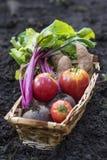 Cesta de vegetais cultivados em casa Fotos de Stock Royalty Free
