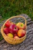 A cesta de vime com as maçãs vermelhas brilhantes está em um aga de madeira da plataforma Foto de Stock Royalty Free