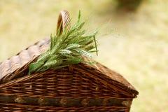 Cesta de vime com as orelhas verdes do trigo Imagens de Stock Royalty Free