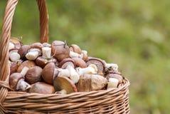Cesta de vime com cogumelos Fotos de Stock Royalty Free